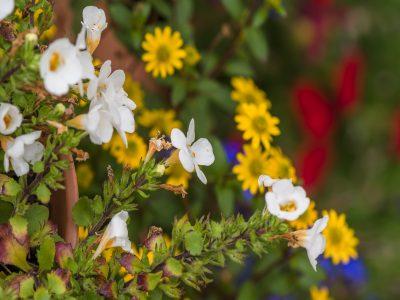 Zahrada u Dobro-mysli