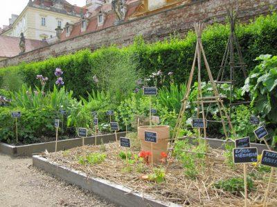 Bylinková zahrada Tiree Chmelar