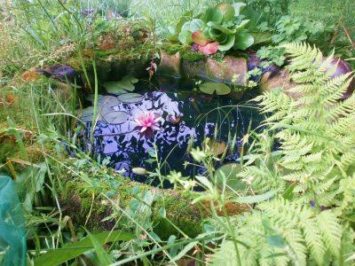 TyMyJáNová zahrada