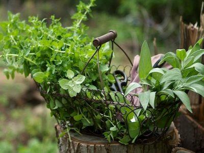 Kouzelné bylinky
