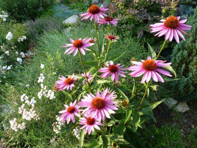 Zahrada na Dobré Vodě