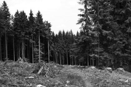 Zachraňme naše lesy