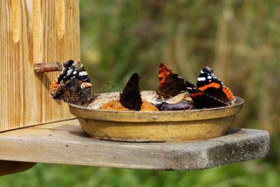 Motýli na naší zahradě