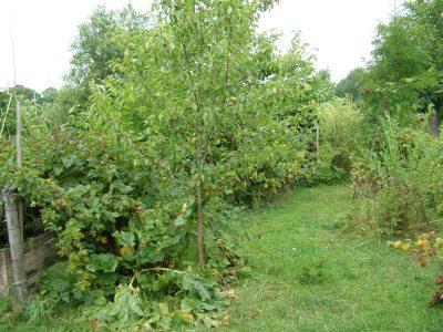 Sandal Wood, zahradní spolek