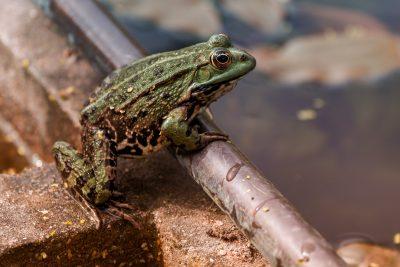 Přírodě blízká péče o městskou zeleň