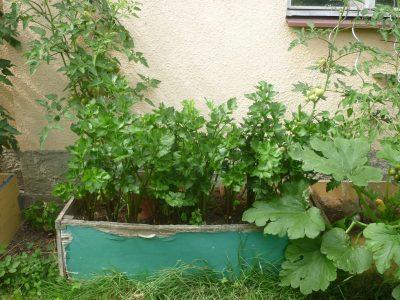 Školní zahrada ZŠ Přibyslav