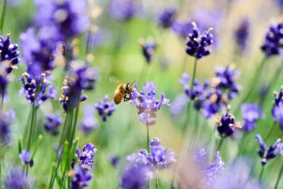 Zákon na ochranu hmyzu