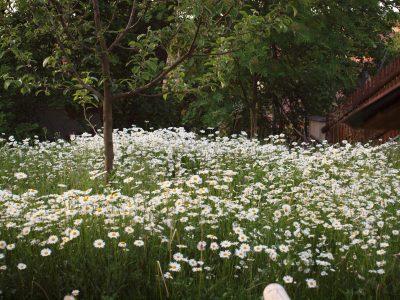 Zahrada v harmonii