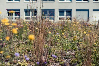 České ekologické zahradní projekty mají na evropské úrovni šanci