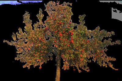 Seminář – Roubování a péče o ovocné stromy