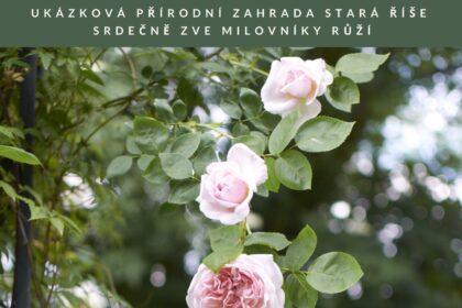 Růže ve Staré Říši
