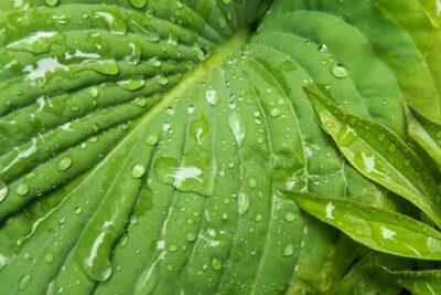 Seminář – Sucho v zahradě