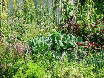 Zahrada Na kopci