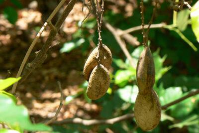 Přírodní cestou proti chorobám a škůdcům
