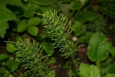 Méně známé, ale účinné alternativy ochrany rostlin